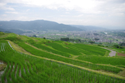 重要文化的景観:姨捨の棚田(長野県千曲市)