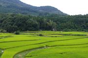 荘園の発達が農村景観を生んだ(大分県豊後高田市田染荘)