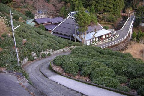 奥永源寺茶園
