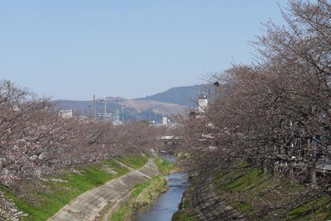 佐保川の桜並木から若草山への眺望
