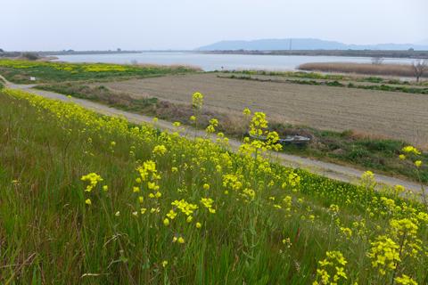 吉野川河川敷